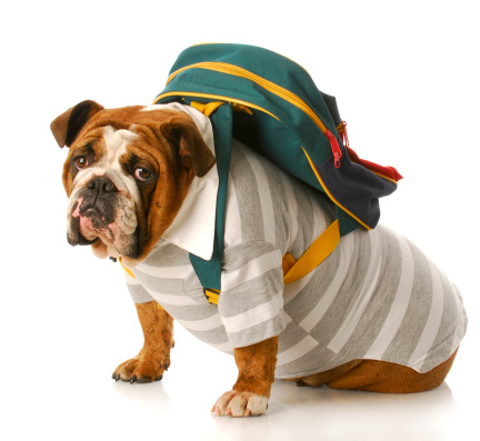 Ideas for making a smart budget for back to school. Learn where to find the best deals, when to buy and how to save money on clothes, supplies and more!